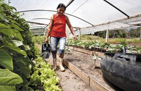 Lisete Aleixo Monteiro giesst Salatpflanzen im selbst gebauten Gewaechshaus.Pará, Brasil.