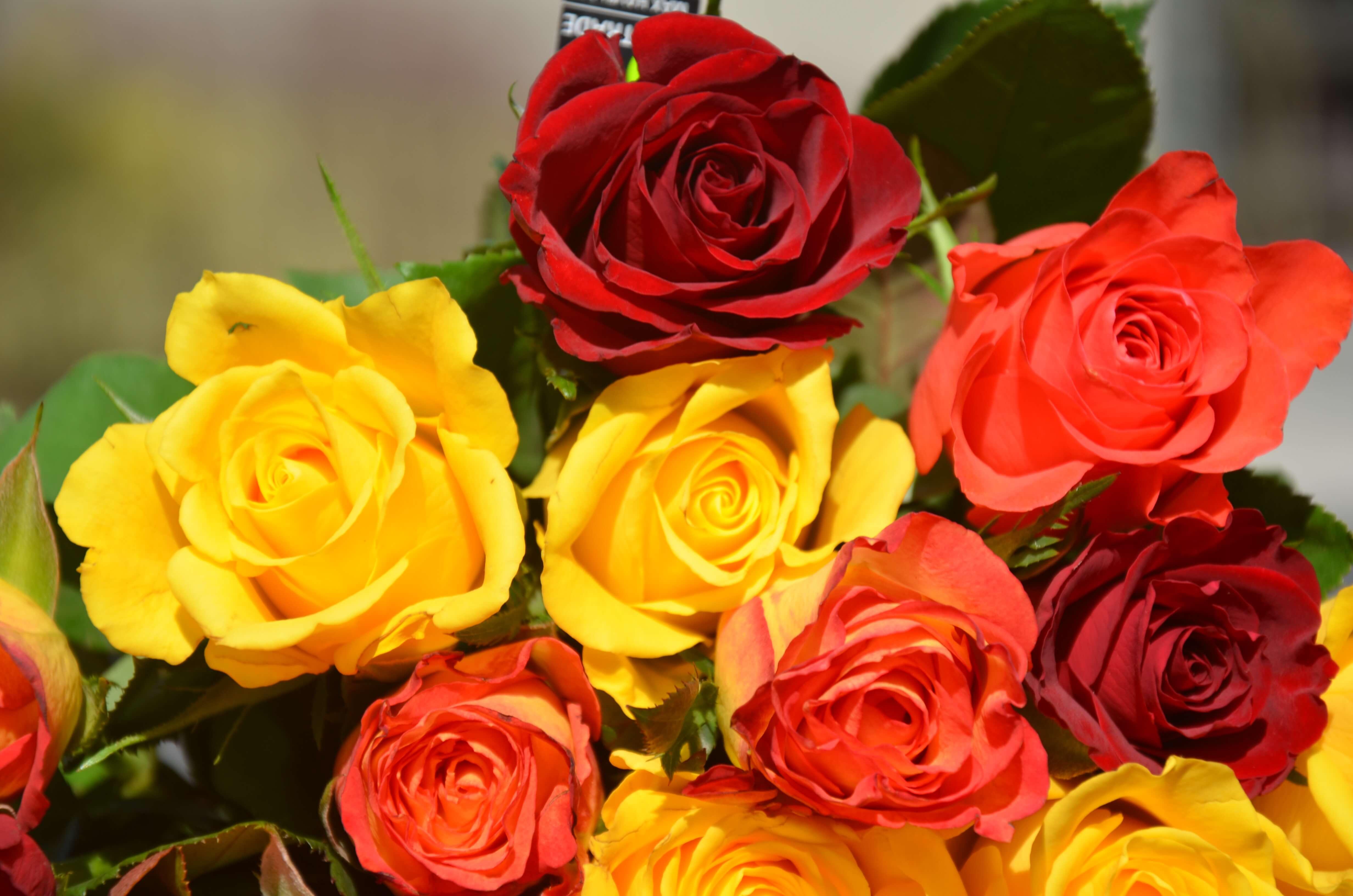 Offrir des roses virtuelles tout en faisant un don for Offrir des roses